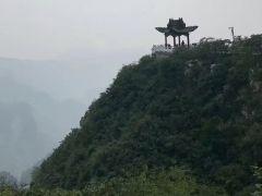 郑州要建中华生物园 伏牛山要建世界植物大观园